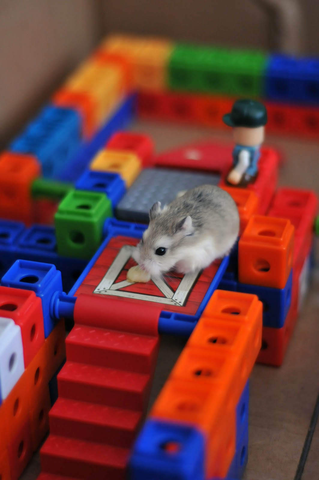 http://hamster.ru/forum2/gallery/1-170814071030.jpeg
