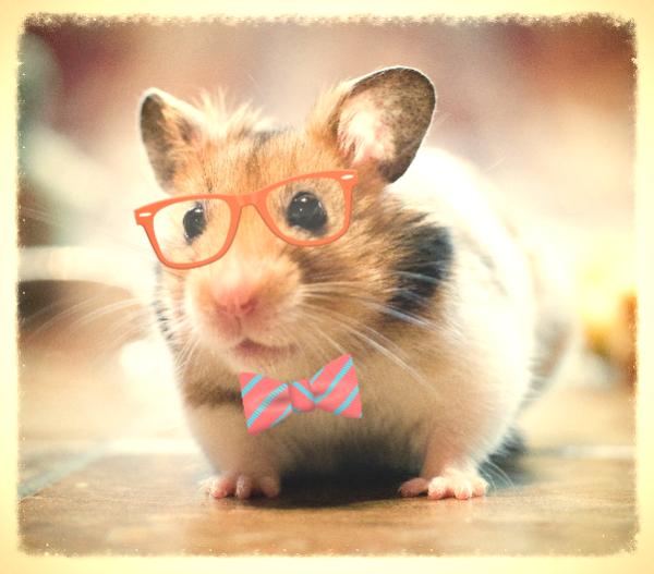 http://hamster.ru/forum2/gallery/1_16_08_14_5_07_15_2.png