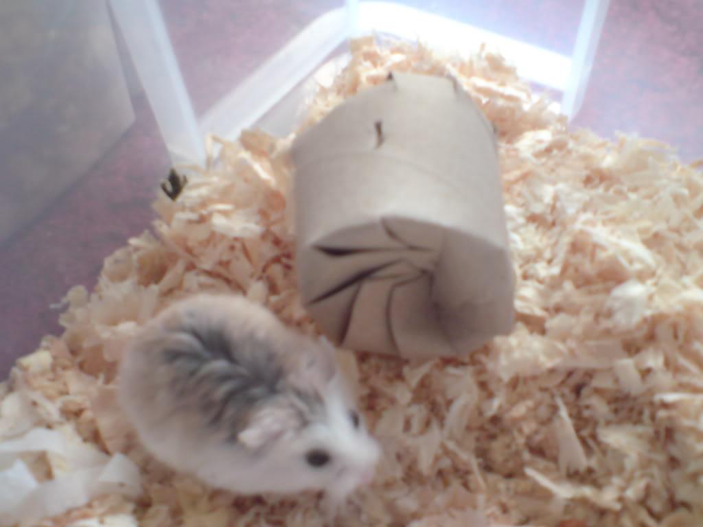 http://hamster.ru/forum2/gallery/2-190814065421.jpeg
