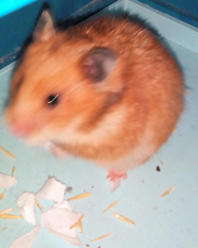 http://hamster.ru/modules/xcgal/albums/userpics/25733/1111.jpg