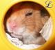 love_hamster